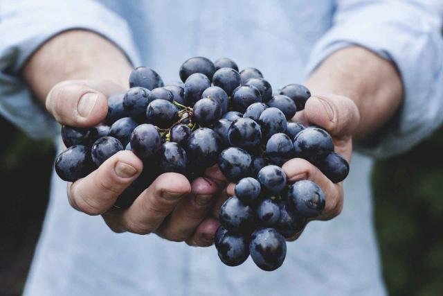 health benefits of resveratrol supplements